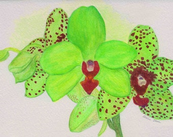 Polka Dot Orchid Watercolor Print by DENISE SLOAN