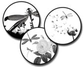 Dragonflies in Nature - 1.25 inch circles - (2) Digital collage sheets