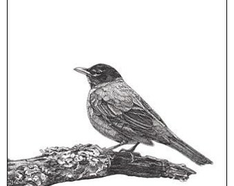 Pen and Ink Drawing Reproduction Robin Note Cards