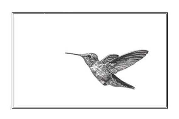 Pen and Ink Drawing Reproduction Hummingbird Note Cards