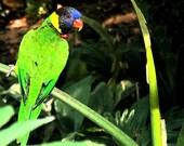 Print 5x7 - Tropical Bird