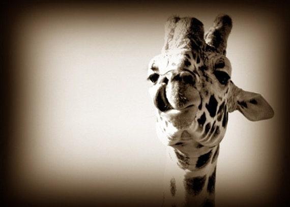 Print 5x7 - Kissing Giraffe, Sepia