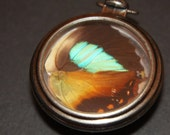 Fire and Ice Butterfly Wing Pendant