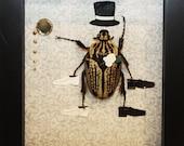Like a Sir Beetle