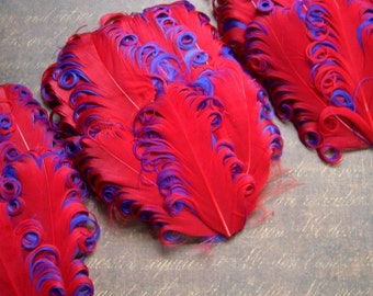 SET OF 5 - Red on Purple Curled Goose Feather Pads