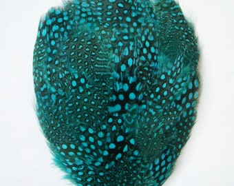 1 Turquoise Guinea Feather Pad