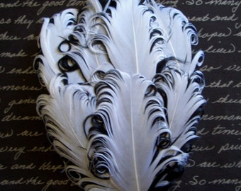 1 White and Black Curled Goose Feather Pad