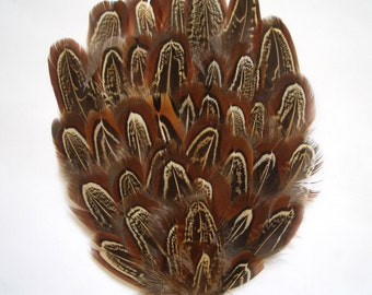 1 Import Brown Almond Pheasant Feather Pad