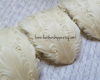 CLEARANCE - Leftover Ivory Imperfect Curled Goose Pads