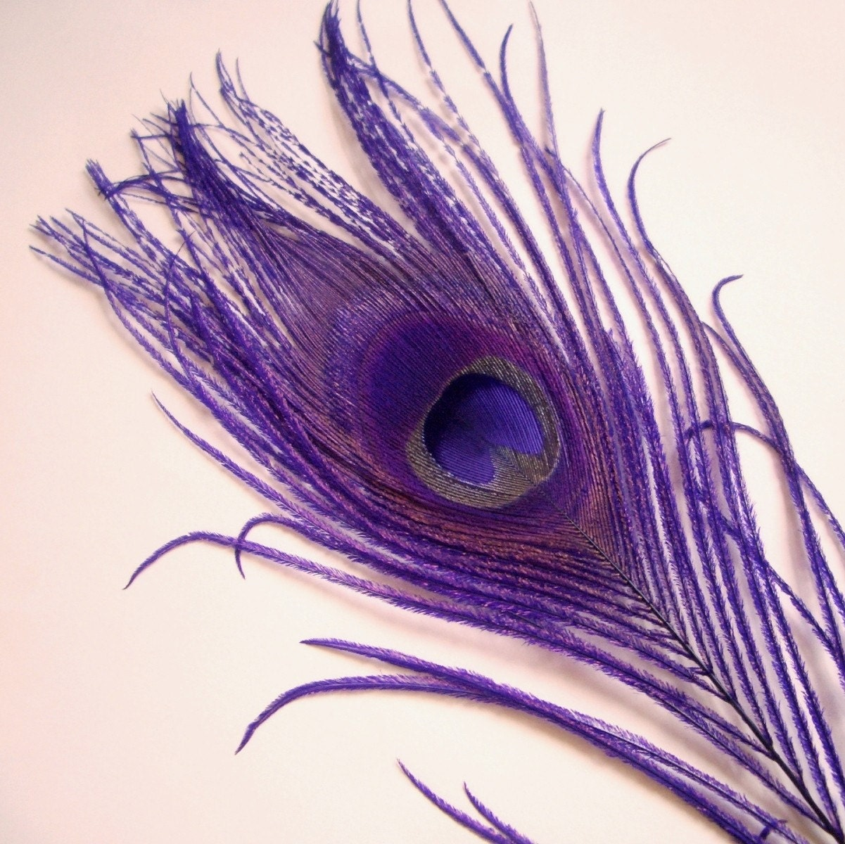 The gallery for --> Peacock Feather Clip Art