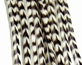 """10 Real Feather Extensions, Salon Quality Hair Feathers, 9"""" Grizzly"""