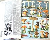 French to the Core - Vintage Larousse Encyclopedia