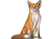 Red Fox Notecards. Set of 5 blank cards with envelopes.