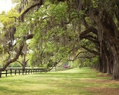 Charleston, South Carolina Photo - Large Oak Trees with Spanish Moss - 8x10 Color (or Black and White) Photo Print - Green Brown Earth