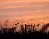 "Birds Flying over Beach Fence in Orange Sunset - ""Fly Away Home"" - 8x10 Color Nature Photography Print"