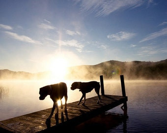 "Boxer Dogs on Foggy Dock at Sunrise Photo - ""Light of My Life"" - 8x10 Color Photo Print"