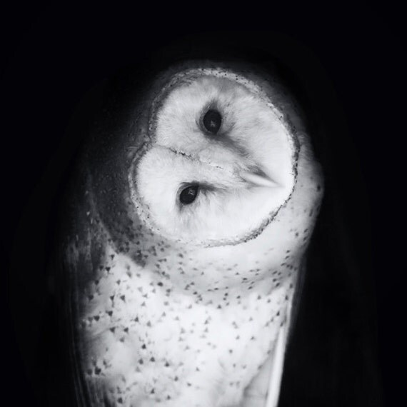 "Barn Owl Photo Portrait - ""Hoo Are You"" - 5x5 Square Black and White Bird Photo Fine Art Print - Gift for Him or Her Under 10"
