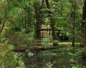 Arboretum Swamp Scene