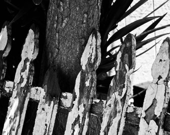 Old Fence 4x6 Fine Art Print
