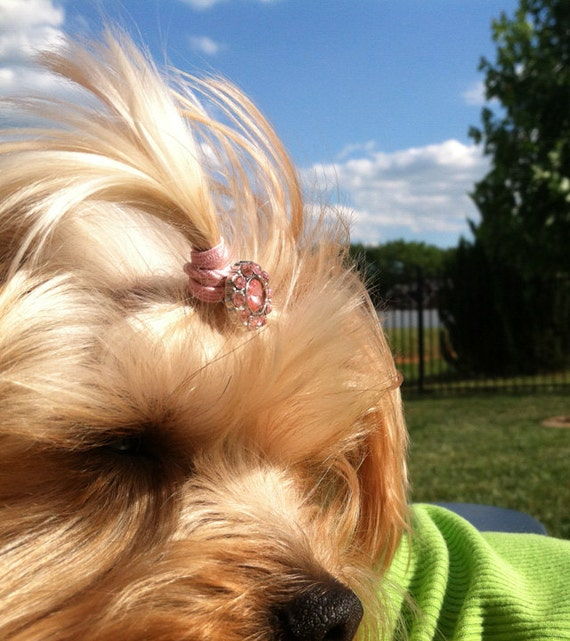 3 Button Bling Top Knot Tamers for your Dog's Hair--TKTamer, Dog Hair Bow Alternative, No Rubber Bands