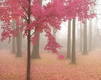 Misty Morning in Pink - Art Print.  Landscape photography. Fog and trees, misty autumn morning, pink and honeysuckle leaves.