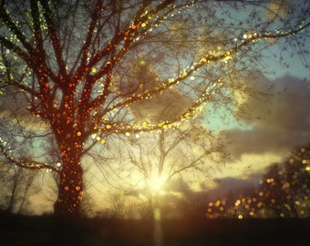 Sweet Dreams. Tree Photography, winter photography, christmas lights, sparkling sunset print.  Holiday gift. Landscape photography.