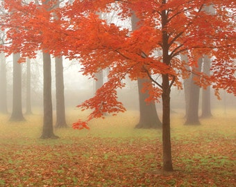 Autumn Mist Art Print - Landscape photography, fall, autumn, foggy morning, leaves turning color, woodlands.