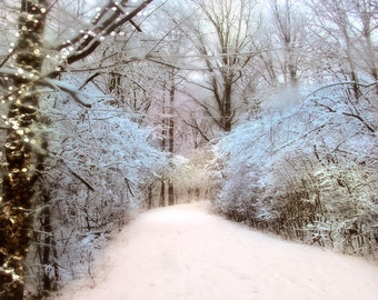 Winter Oasis. Winter photography, snow photography, freshly fallen snow with festive blue ice on forest trees.