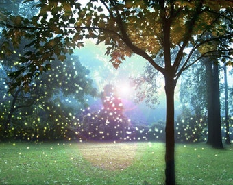 Catching Fireflies Art Prin - Tree landscape photography.