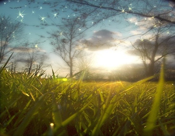 grassy artistic photograph with twinkling stars at twilight