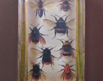 Bee Botanical Illustration Rectangle Glass Paperweight Home Decor