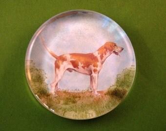 English Foxhound Dog Portrait Large Round Glass Paperweight