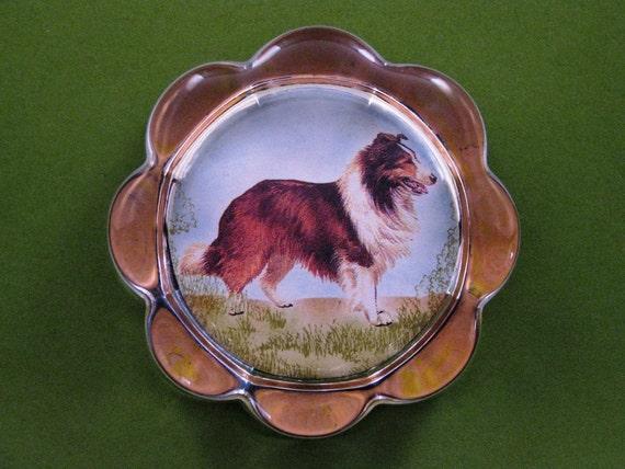 Shetland Sheepdog Dog Portrait Scallop Glass Paperweight