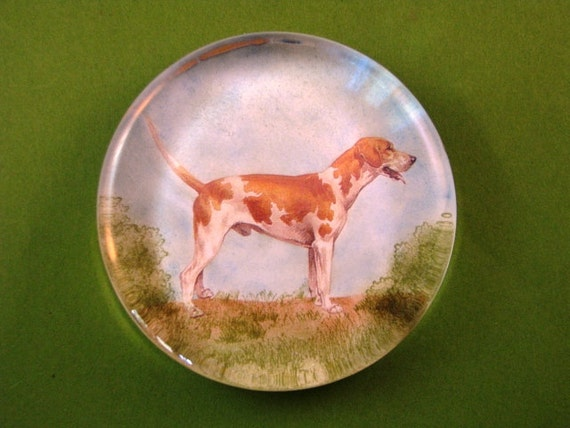 English Foxhound Dog Portrait Large Round Glass Paperweight
