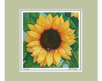 Sun One Sunflower - Archival botanical 8x8 print in a 12x12 mat, from original drawing by Tara Kemp