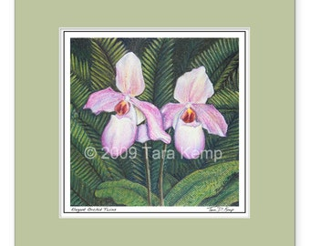 Elegant Orchid Twins - Archival botanical 8x8 signed print in a 12x12 mat, from original drawing by Tara Kemp