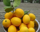 Fresh Meyer Lemons -  Organic New Crop