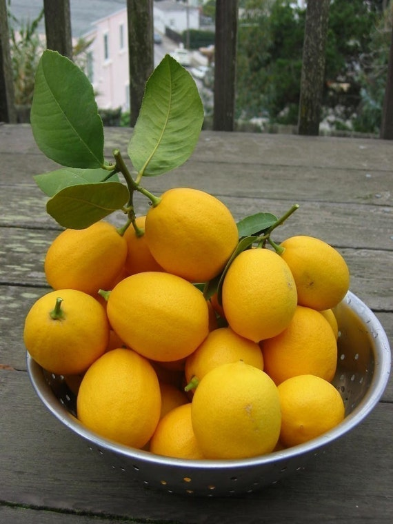 Fresh Meyer Lemons - Organic New Crop