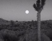 Sunset in the Desert. Matted fine art photograph.