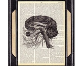 ANATOMICAL BRAIN art print on vintage dictionary text book page human anatomy black white illustration neurology neurologist psychology 8x10