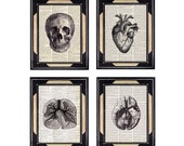 ANATOMICAL ART Skull Brain Heart Lungs 4 art prints set medical science black white vintage illustrations on dictionary book page 8x10, 5x7