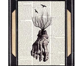 Anatomical FOOT art print wall decor human anatomy bones Orthopedic illustration vintage dictionary book page Roses Tree medical doctor 8x10