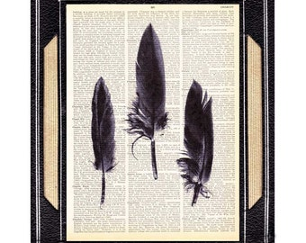 CROW FEATHERS art print natural science black bird feather woodland plume raven on upcycled vintage dictionary book page wall decor 8x10