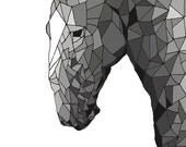 Equus ferus caballus ( Horse )