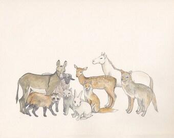 Animals - postcard