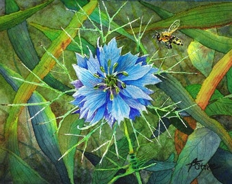 Tiny Bits of Nature - Love in a Mist - Matted Print from Original Watercolor