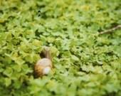 Polaroid - The Snail's Dream - 8 x 8