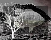 Black & White Fish Art, Digital Print, Abstract Photomontage, Aquatic Nautical, Office Cabin Home Decor, Wall Hanging, Giclee Print