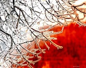 Icicles Art Winter Tree Icy Branches Digital Print Red White Wintry Snow Ice Southwestern Home Decor Office Wall Hanging Giclee Print 8 x 10