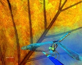 Dragonfly Art, Digital Photomontage Composite, Blue Golden Yellow, Orange Leaf, Woodland Wildlife, Wall Hanging, Home Decor, 8 x 10